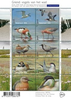 The centenary of protecting the bird island of Griend… 10 natural bird stamps introduced by PostNL