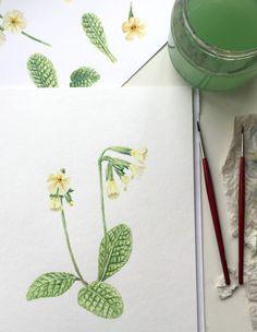 Aquarell Frühlingsblüher, Schlüsselblume - Watercolor Primula