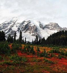Mount Rainer National Park located southeast of Seattle with more than 260 miles of trails
