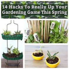 Hacks To Really Up Your Gardening Game This Spring