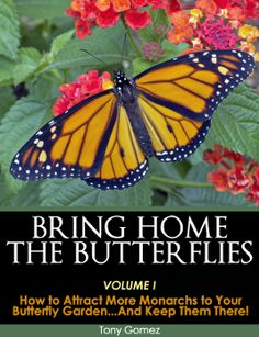 This 21 point checklist for creating a School Butterfly Garden was designed to help teachers and students achieve a higher level of butterfly garden success