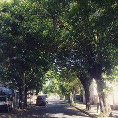 El barrio  #buenosdias #buenosaires #moron #primavera #nature #sol #sun #findesemana
