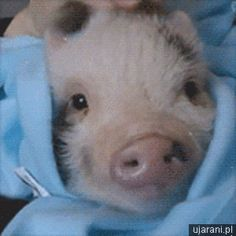 Love this little pig!!