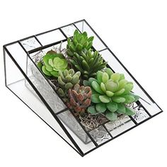 Amazing Modern Design Triangular Shape Clear Glass Succulent Planter Box / Angled Terrarium Display Stand