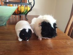 And this piggy who has his very own stuffed animal twin! | 26 Guinea Pigs Who Will Make You Smile The Most