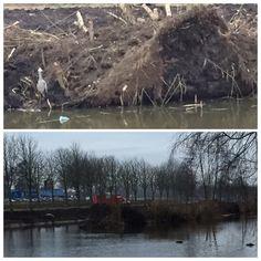 De aanleg van een natuurvriendelijke oever in de Westwijk met meerdere ijsvogelwanden. De wanden worden in samenwerking met vrijwilligers, een aannemer en de gemeente aangelegd. Het eerste stuk is nu gereed.
