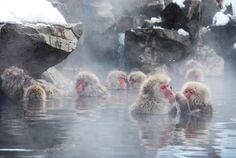 jigokudani onsen snow monkey japan