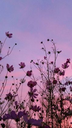 Flowers and sky Aesthetic wallpapers Aesthetic Pastel Wallpaper, Aesthetic Backgrounds, Aesthetic Wallpapers, Classic Wallpaper, Beautiful Wallpaper, Sky Aesthetic, Flower Aesthetic, Tumblr Wallpaper, Wallpaper Backgrounds
