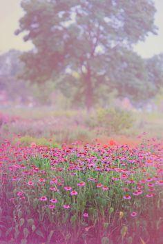 tulipnight - Monet Spring by Jenny Rainbow