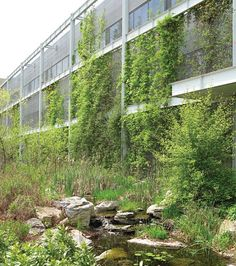 National Wildlife Federation headquarters in Reston, VA utilizes living wall, daylighting, storm water retention and habitat for wildlife.