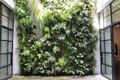 love the green wall Capitol_Charlotte_Patrick_Blanc_Living_wall Jardin Vertical Diy, Vertical Garden Design, Vertical Gardens, Vertical Planting, Small Gardens, Outdoor Gardens, Growing Gardens, Tropical Gardens, Vegetal Concept