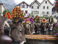 Alpabzug near St. Gallen, Switzerland