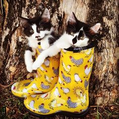 Puss 'n boots and #Sloggers. Chicken print available at TractorSupply.com in red or yellow
