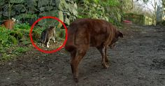 Trevel is an old farm dog that is blind and partially deaf. He was afraid to leave the safety of his bed due to having been abused when he was younger. Then, Trevel met Pudditat, a stray cat. The two grew close very quickly and, to everyone's surprise, the cat began leading the dog around.