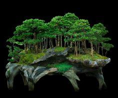 Bonsai monte forest                                                       …