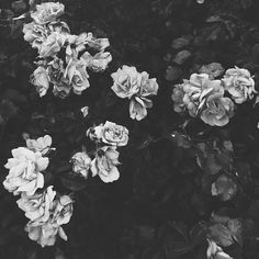 'Flowers grow out of dark moments' ~ Corita Kent #vscocam // bianca cash
