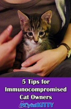 Immunocompromised people can have cats too! What do you do to keep diseases from spreading between you and your cat?