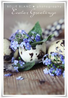 BELLE BLANC- flowers in broken eggs, Easter idea