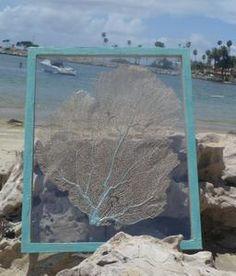 Pretty 16 x 20  framed natural sea fan
