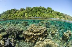 Underwater Togean Islands, Central Sulawesi, Indonesia.