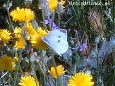...una sesión de mariposa blanca.....