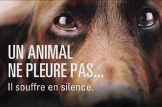 Affiche 30 millions d'amis... Luttons contre les abandons d'animaux domestiques ! - Cause animale - Wamiz