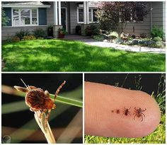 7 Awesome Ways To Tick Proof Your Yard