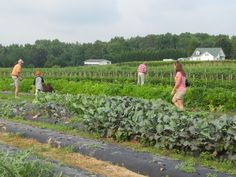 farms | Correll Farms in Cleveland NC is one of the farms we will visit during ...