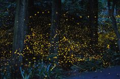 long exposure fireflies