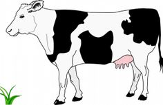 vector cow simple drawing clipart eating drawings animal illustration easy svg dairy line grass barn cattle publicdomainvectors animals