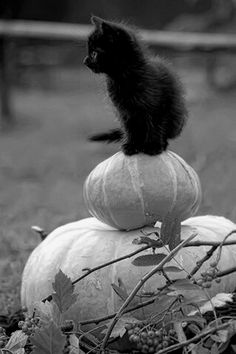 Cute halloween kitty picture for you soft-hearted Goths out there