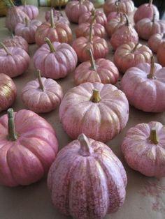 Pink pumpkins everywhere :) Fete Halloween, Pink Halloween, Halloween Decorations, Halloween Fashion, Happy Halloween, Pink Pumpkins, Painted Pumpkins, Fall Pumpkins, Wedding Pumpkins