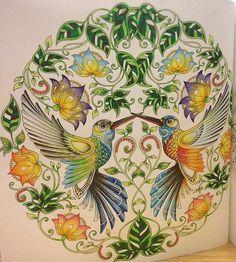 ひみつの花園が塗り終わったら、次は動物や生き物が多い塗り絵に挑戦してみたいな(´-`) #ひみつの花園 #コロリアージュ #おとなのぬりえ #大人の塗り絵 #塗り絵 #ジョハンナバスフォード #secretgarden #coloringbook #johannabasford #johannabasfordsecretgarden #adultcoloring