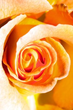 ROSE by LEVIATAN-666.deviantart.com on @DeviantArt