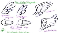 Pony Study: Wings001 by AffinityPony on DeviantArt
