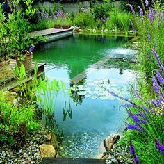 piscine biologique, jolies fleurs autour