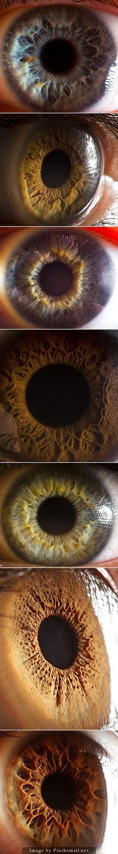 http://www.lostateminor.com/2011/07/15/incredible-macro-photography-of-peoples-eyes/