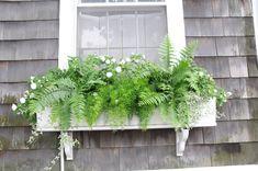 window box and ferns