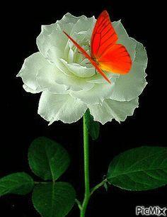 Imagenes+De+Flores+Con+Mariposas+Con+Movimiento                              …