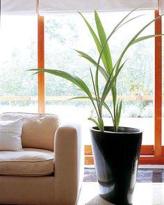 Decorar con plantas: Hay que tener mano verde