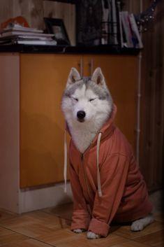 Sleepy Wind being cozy in my hoodie :) - Imgur