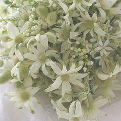 スモーキーグリーン。完全にお任せだったので思いきり好きに地味に作らせてもらいました。 今見てもやっぱりこういう花好きだなぁ。8年経っても。実はアシスタントさんへのブーケでした。#フランネルフラワー #ウェディング#ウエディング#ブーケ#ブライダル#すずらん#ナチュラル#花嫁#プレ花嫁 #結婚式#結婚式準備 #結婚準備#一会#bouquet#wedding #flowers