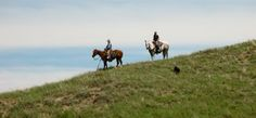 Experience the romantic vision of the old west - learn to work cattle, ride the range and experience life as a real cowboy on a real working cattle ranch. Coming to Rowse's 1+1 Ranch, you'll ride with us. #workingranches