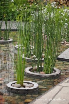 A closer look at the water feature in The Greening Grey Britain Garden, designed by Professor Nigel Dunnett, pictured at the RHS Chelsea Flower Show Dig Gardens, Amazing Gardens, Beautiful Gardens, Chelsea Flower Show, Covent Garden, Landscape Design, Garden Design, Organic Horticulture, Organic Gardening Tips