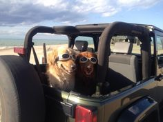 Nothing like bringing mans best friend along for a ride! #cherryhill #jeep #beach #carride