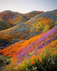 The bloom is going off in California! & Who would you take to enjoy this mesmerizing raw beauty! & Photo by w/ The post The bloom is going off in California! W appeared first on . Landscape Photography, Nature Photography, Photography Tips, Photography Training, Photography Equipment, Digital Photography, Travel Photography, Destination Voyage, Photos Voyages