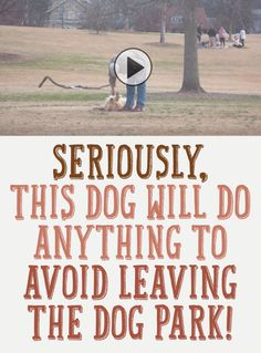 Seriously?! This Dog Will Do Anything To Avoid Leaving The Dog Park!! Sooo Funny!