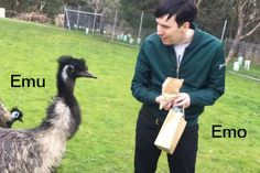 Phil and a Emu<< this post is amazing