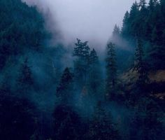 Dark Forest | Beautiful Place