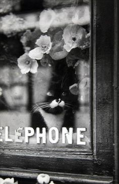 George Brassaï (pseudonym of Gyula Halász) (9 September 1899 – 8 July 1984), Hungarian photographer